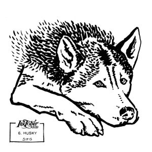 Husky - Brush marker sketch