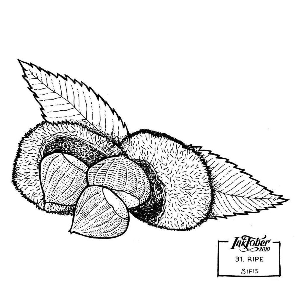 Ripe - Marker sketch